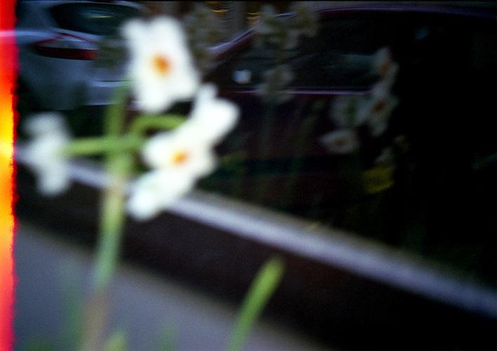 Flowers © Flore Willefert-11