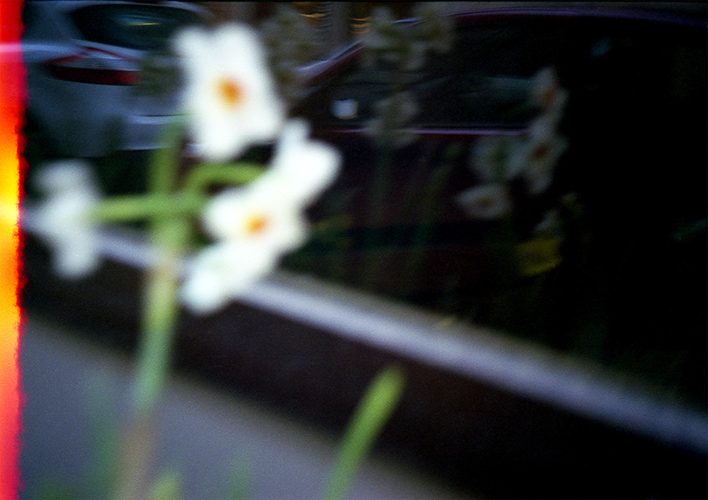 Flowers © Flore Willefert-11